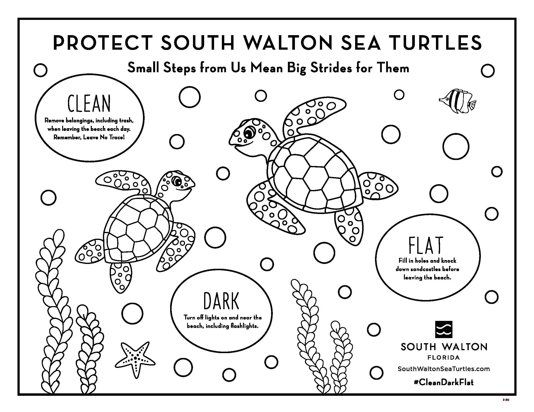 Sea Turtle Activity