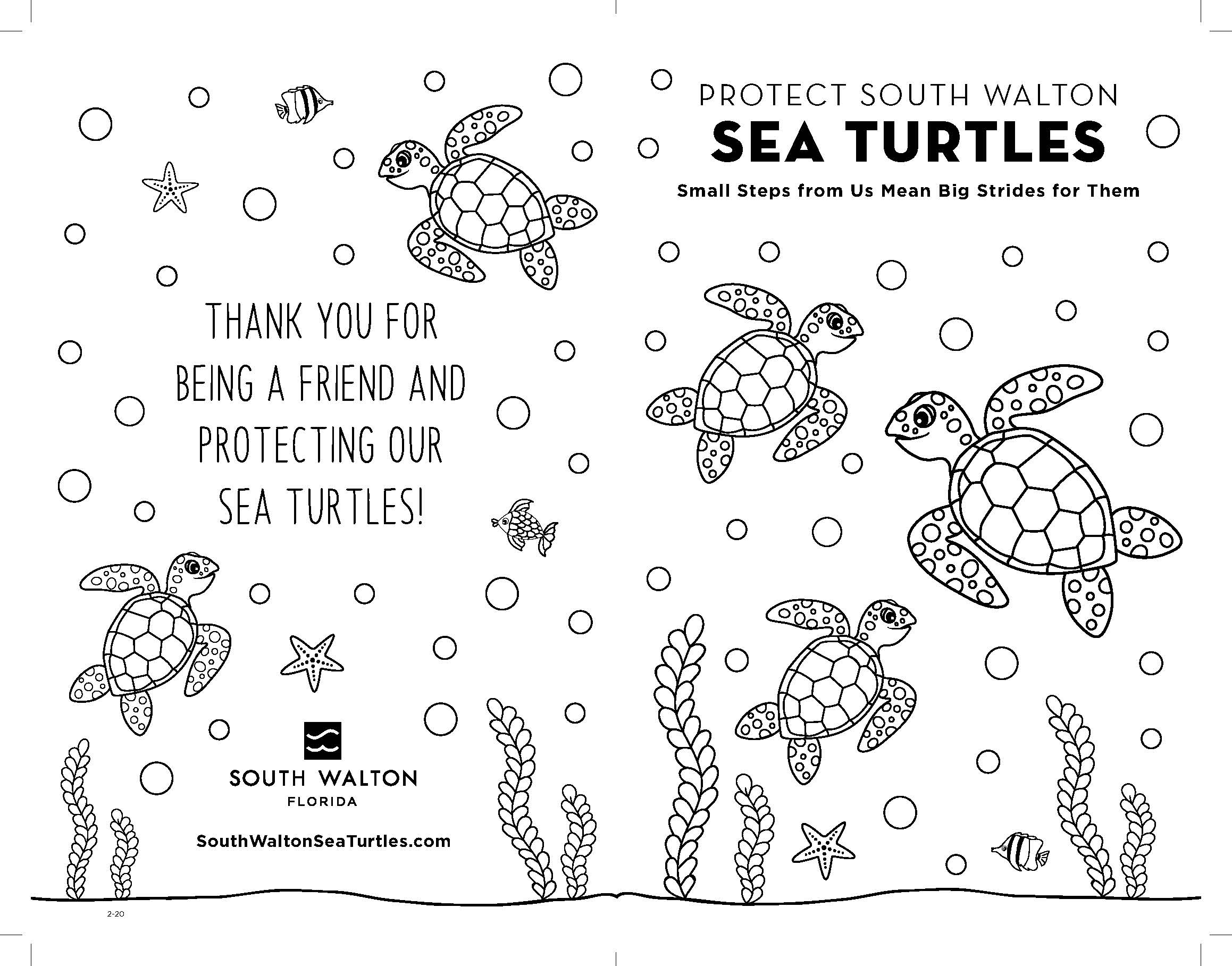 Sea Turtle Booklet Cover
