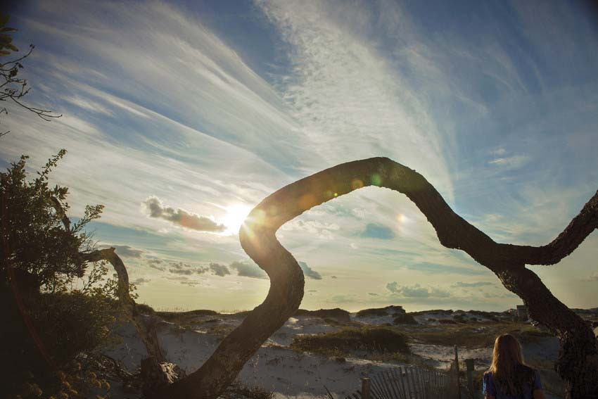 Twisting branch against beautiful sky at Grayton Beach State Park